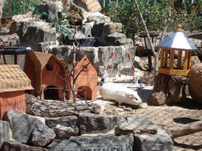 pfotenland meerschweinchen