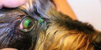 Augenentzündung / Bindehautentzündung