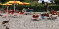 Italien - Urlaub mit dem Hund am Gardasee